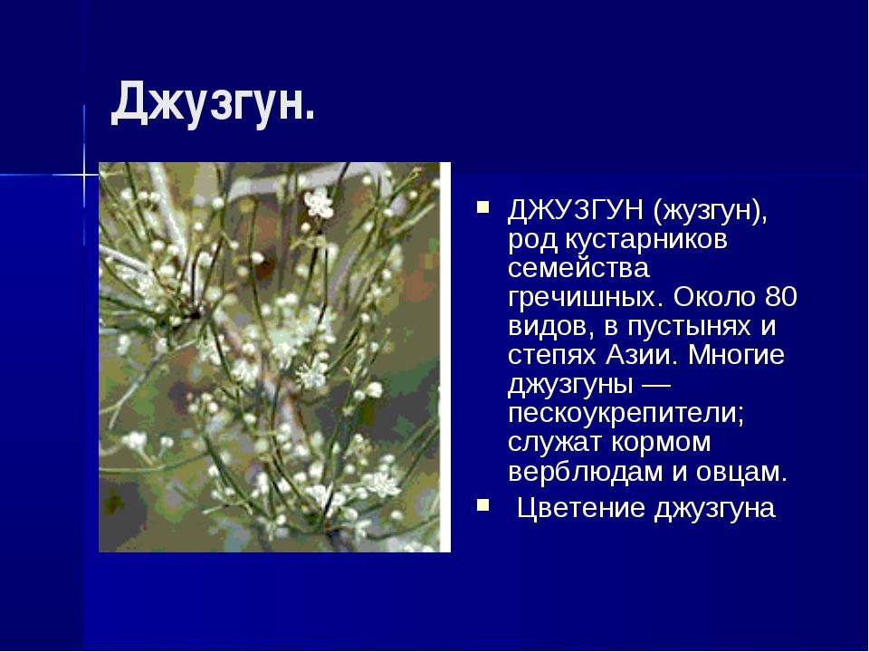 Джузгун. ДЖУЗГУН (жузгун), род кустарников семейства гречишных. Около 80 видо...