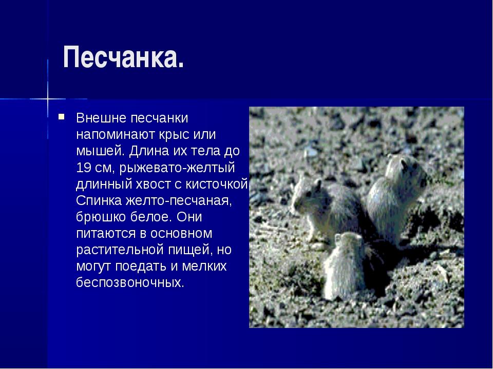 Песчанка. Внешне песчанки напоминают крыс или мышей. Длина их тела до 19 см,...