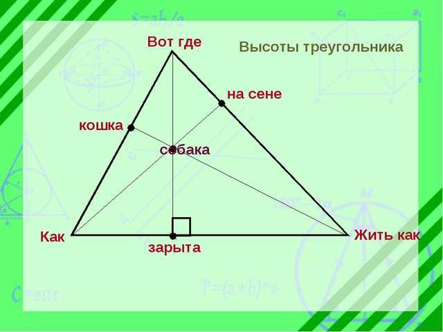 на сене зарыта кошка Вот где Как Жить как собака Высоты треугольника
