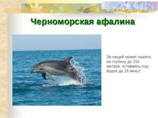 За пищей может нырять на глубину до 150 метров, оставаясь под водой до 15 мин