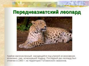 Переднеазиатский леопард Крайне малочисленный, находящийся под угрозой исчезн