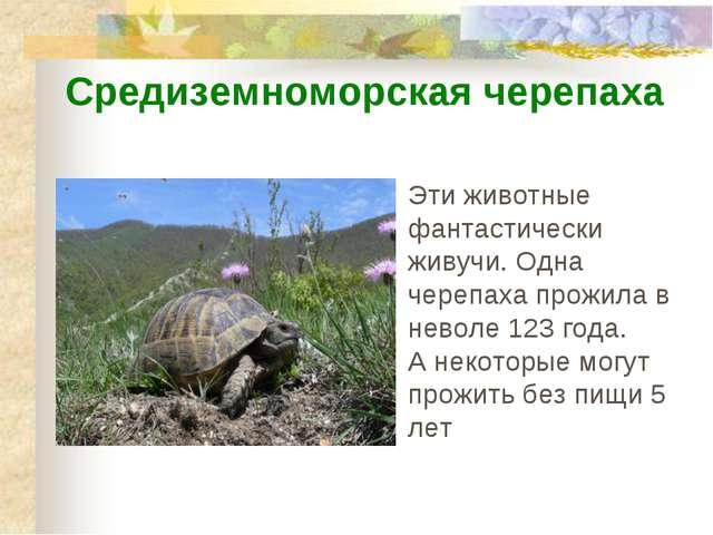 Эти животные фантастически живучи. Одна черепаха прожила в неволе 123 года. А...