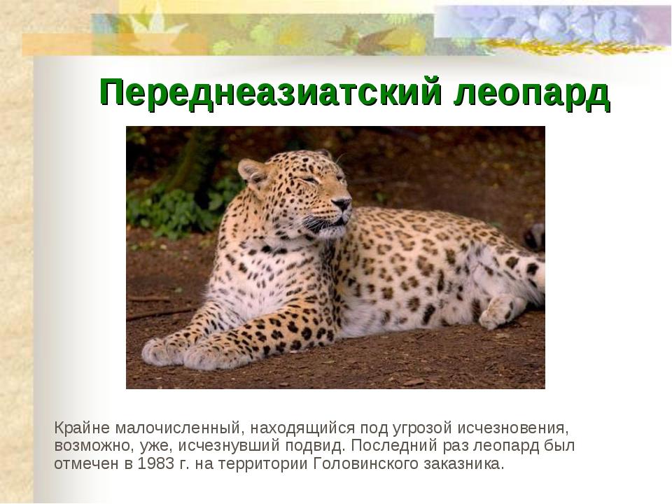 Переднеазиатский леопард Крайне малочисленный, находящийся под угрозой исчезн...
