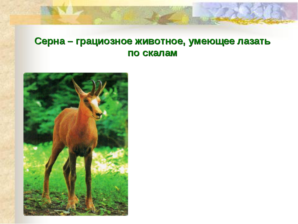 Серна – грациозное животное, умеющее лазать по скалам