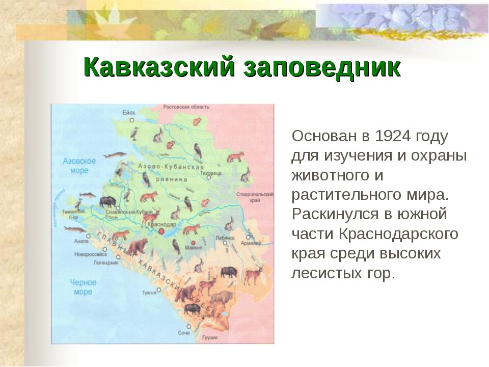 Кавказский заповедник Основан в 1924 году для изучения и охраны животного и р...
