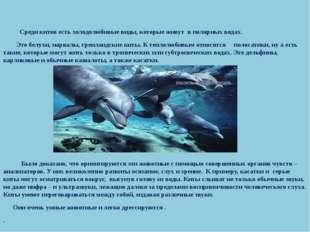 Среди китов есть холодолюбивые виды, которые живут в полярных водах. Это бел