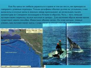 Как бы киты не любили держаться в одном и том же месте, им приходится соверш