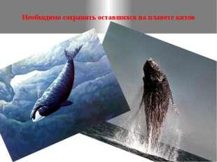 Необходимо сохранять оставшихся на планете китов