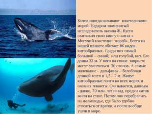 Китов иногда называют властелинами морей. Недаром знаменитый исследователь о