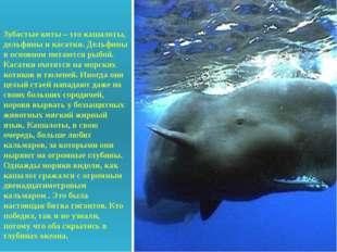 Зубастые киты – это кашалоты, дельфины и касатки. Дельфины в основном питают