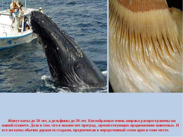 Живут киты до 50 лет, а дельфины до 30 лет. Китообразные очень широко распро...