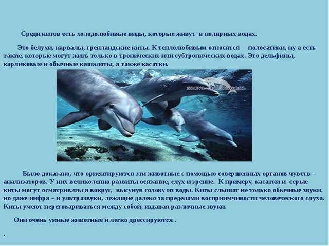 Среди китов есть холодолюбивые виды, которые живут в полярных водах. Это бел...