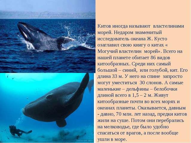 Китов иногда называют властелинами морей. Недаром знаменитый исследователь о...
