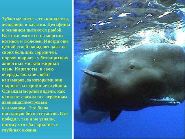 Зубастые киты – это кашалоты, дельфины и касатки. Дельфины в основном питают...
