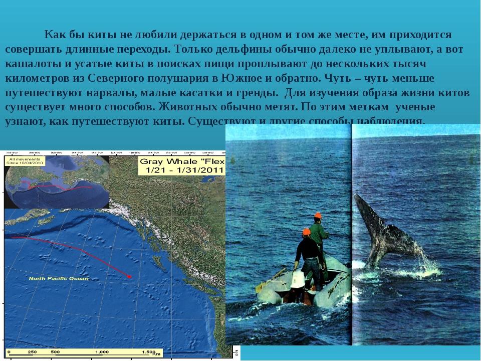 Как бы киты не любили держаться в одном и том же месте, им приходится соверш...