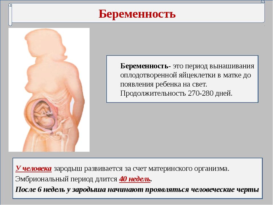 Какая внутриутробная беременность