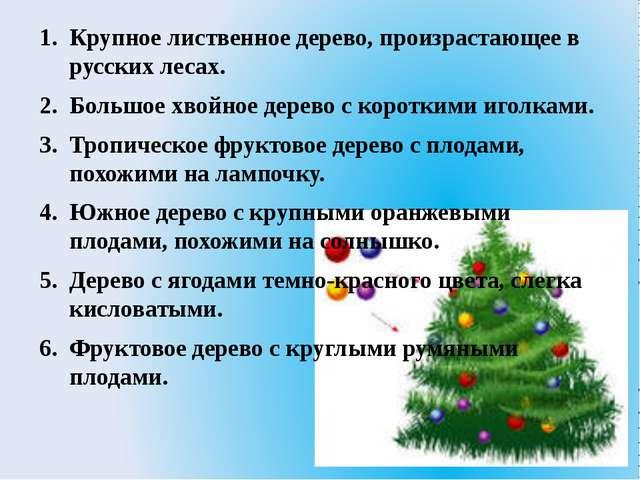 Крупное лиственное дерево, произрастающее в русских лесах. Большое хвойное де...