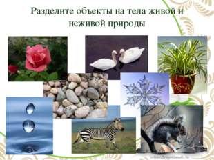 Разделите объекты на тела живой и неживой природы