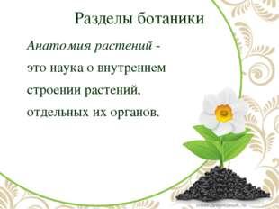 Разделы ботаники Анатомия растений- это наука о внутреннем строении расте