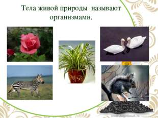 Тела живой природы называют организмами.