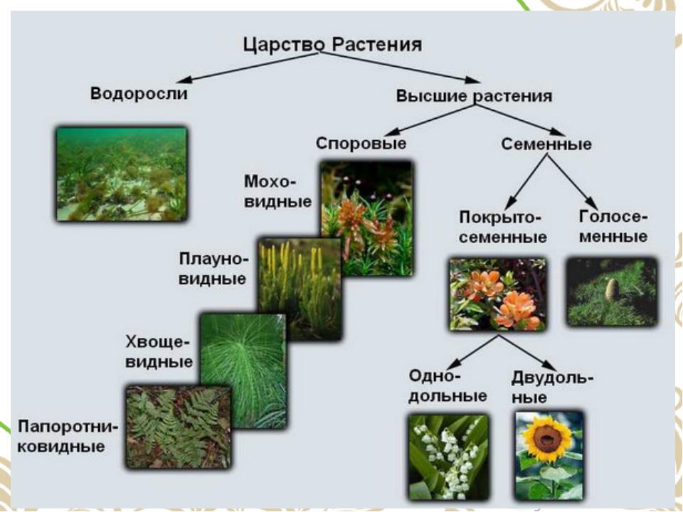 биология животные растения картинки с названиями такую пару