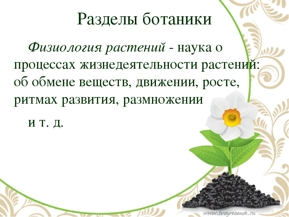 Разделы ботаники Физиология растений- наука о процессах жизнедеятельности р...