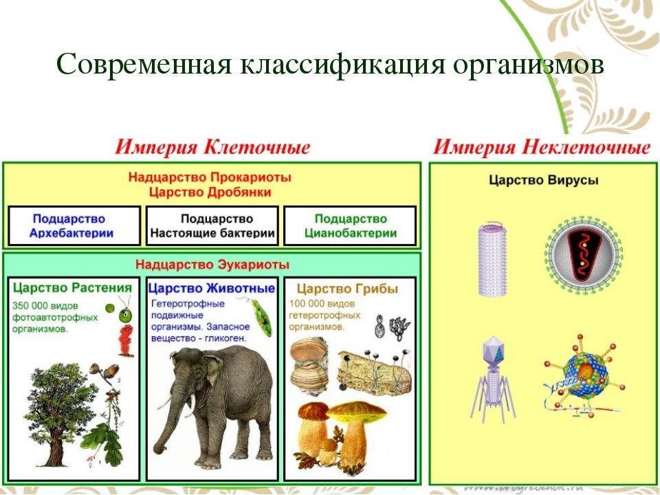 Современная классификация организмов