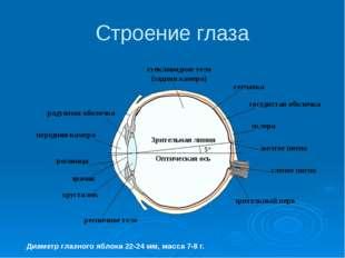 Строение глаза Диаметр глазного яблока 22-24 мм, масса 7-8 г. Оптическая ось
