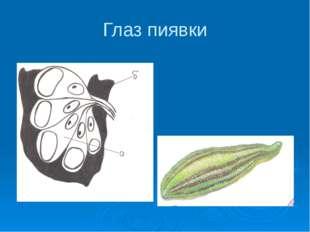 Использован материал Физика. 11 кл.: Учебник для общеобразовательных учрежден