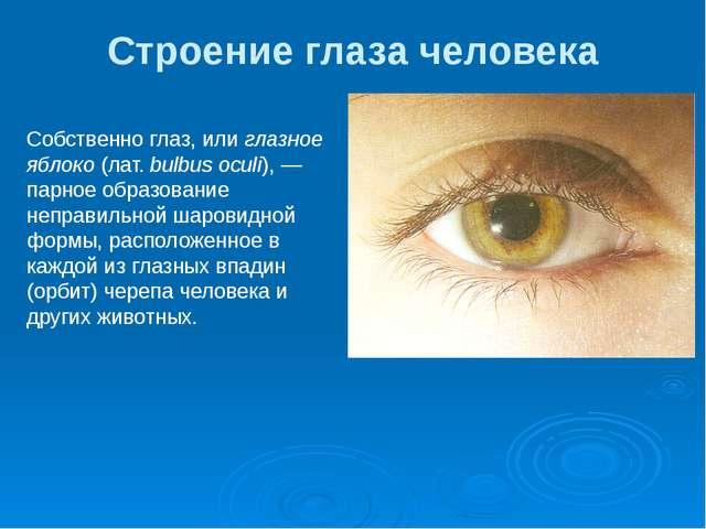 Строение глаза человека Собственно глаз, или глазное яблоко (лат. bulbus ocul...
