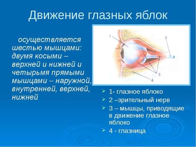 Движение глазных яблок осуществляется шестью мышцами: двумя косыми – верхней...