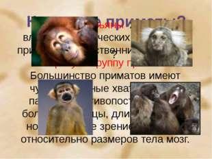 Кто такие приматы? ? Многие обезьяны живут во влажных тропических лесах. Они