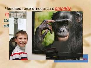 Человек тоже относится к отряду приматов. Семейство человекообразных обезьян