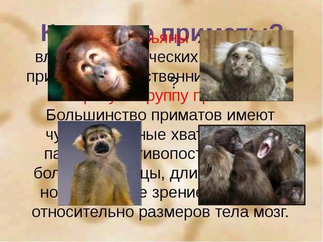Кто такие приматы? ? Многие обезьяны живут во влажных тропических лесах. Они...
