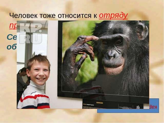 Человек тоже относится к отряду приматов. Семейство человекообразных обезьян...