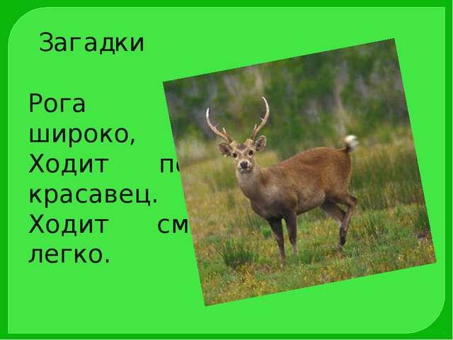 Рога раскинув широко, Ходит по лесу красавец. Ходит смело и легко. Загадки
