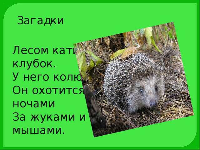 Лесом катится клубок. У него колючий бок. Он охотится ночами За жуками и мыша...