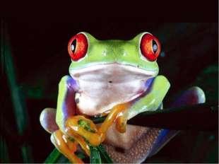 Лягушки замечают только движущиеся предметы. Неподвижного червяка или насеком