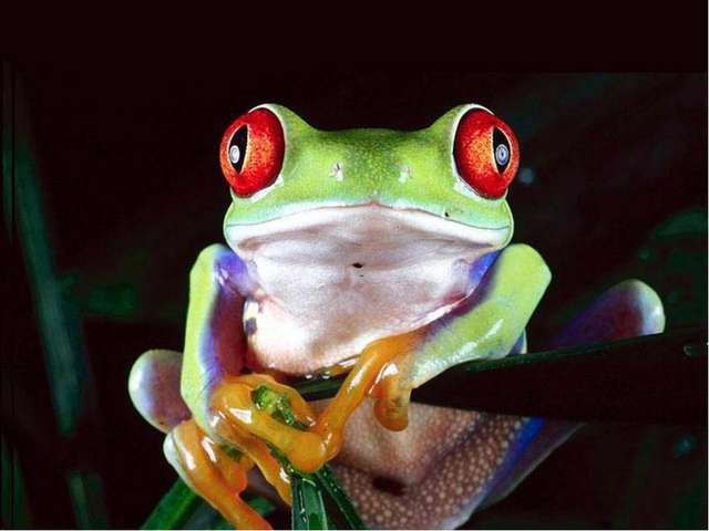 Лягушки замечают только движущиеся предметы. Неподвижного червяка или насеком...