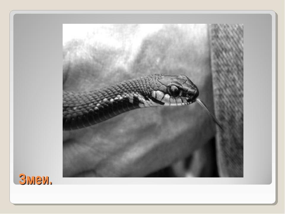 Змеи.