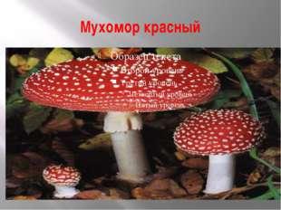Мухомор красный