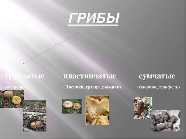 ГРИБЫ трубчатые пластинчатые сумчатые (маслёнок, (Лисички, грузди, рыжики) (с...