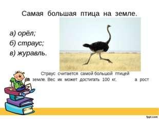 Самая большая птица на земле. а) орёл; б) страус; в) журавль. Страус счи