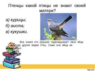 Птенцы какой птицы не знают своей матери? а) курицы; б) аиста; в) кукушки.