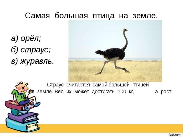 Самая большая птица на земле. а) орёл; б) страус; в) журавль. Страус счи...