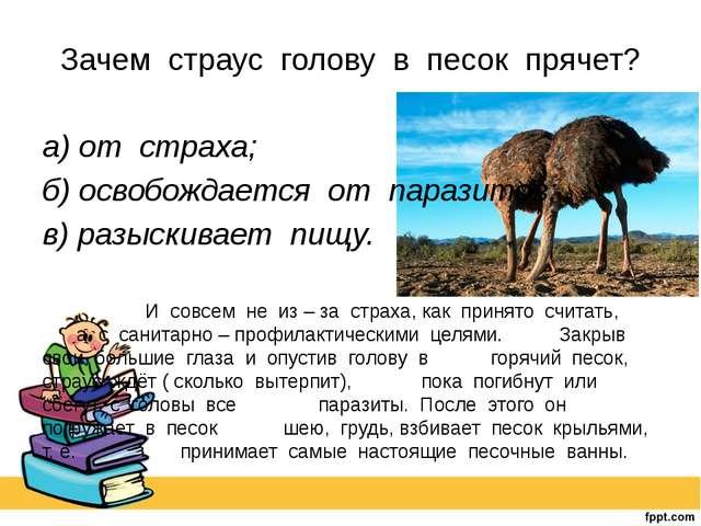 Зачем страус голову в песок прячет? а) от страха; б) освобождается от парази...