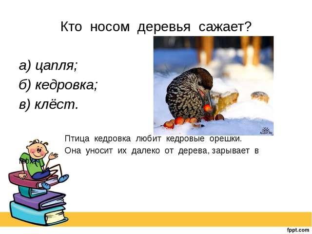 Кто носом деревья сажает? а) цапля; б) кедровка; в) клёст.  Птица кедров...