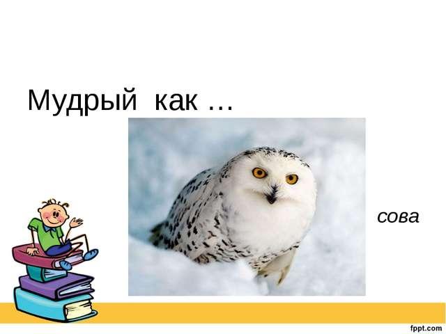 Мудрый как … сова