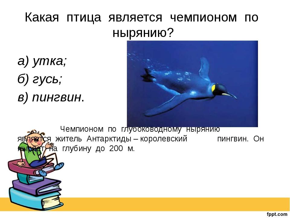 Какая птица является чемпионом по нырянию? а) утка; б) гусь; в) пингвин....