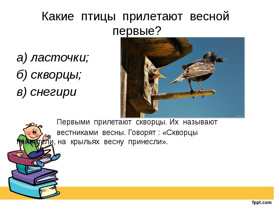 Какие птицы прилетают весной первые? а) ласточки; б) скворцы; в) снегири...